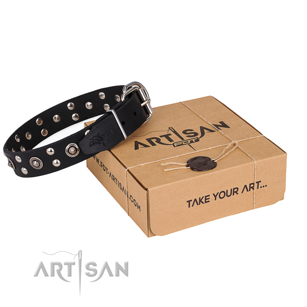 Everyday use dog collar with Unusual corrosion proof adornments