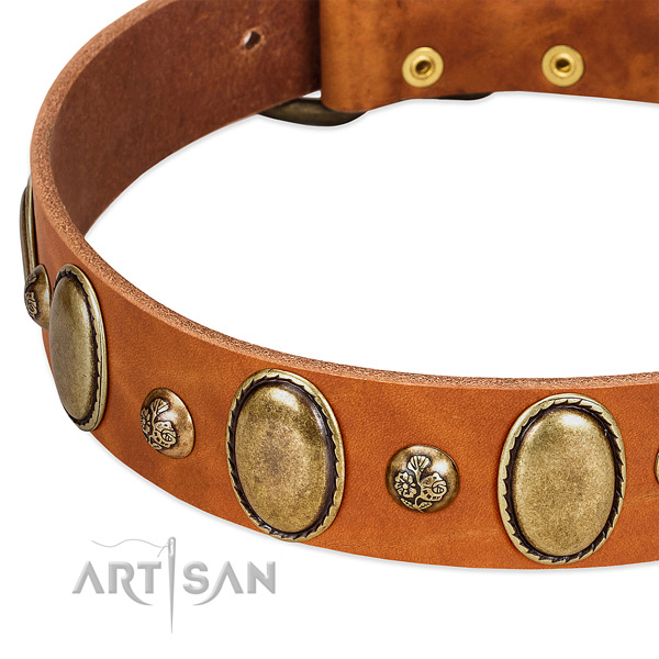Natural leather dog collar with awesome embellishments