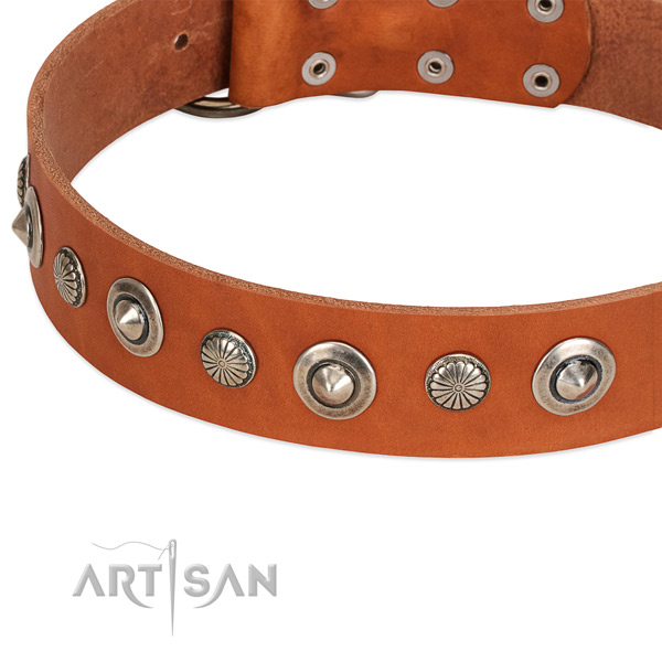 Impressive embellished dog collar of durable natural leather