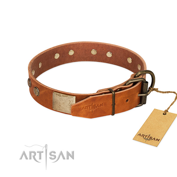 Rust resistant traditional buckle on daily walking dog collar