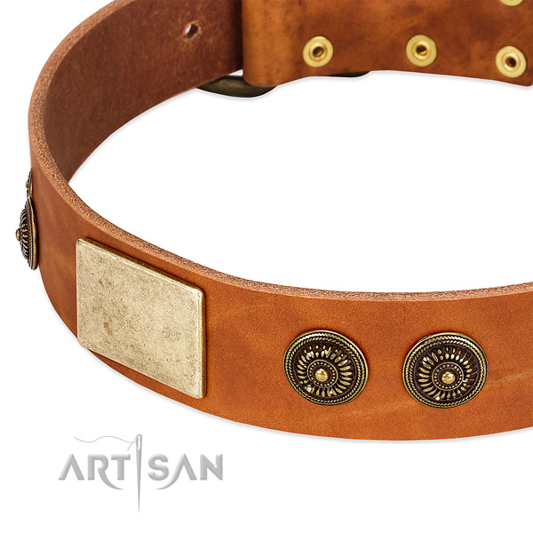 Stylish dog collar made for your beautiful pet