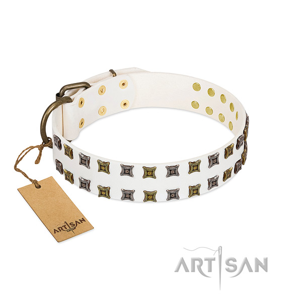 Durable full grain leather dog collar with studs for your four-legged friend