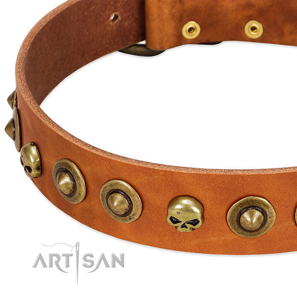 Top notch studs on leather collar for your canine