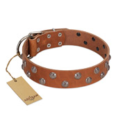 """Waltz of the Flowers"" Handmade FDT Artisan Tan Leather English Bulldog Collar with Chrome-plated Engraved Studs"