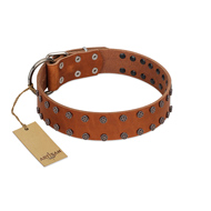 """Star Light"" Stylish FDT Artisan Tan Leather English Bulldog Collar with Silver-Like Studs"