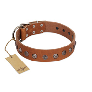 """Silver Age"" Fashionable FDT Artisan Tan Leather English Bulldog Collar with Silver-Like Studs"
