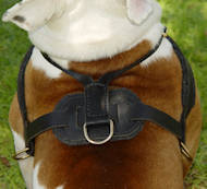 Super Light Weight Tracking/Pulling Leather Dog Harness For English Bulldog
