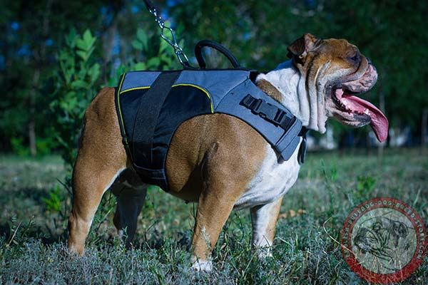 Easy-to-adjust English Bulldog harness