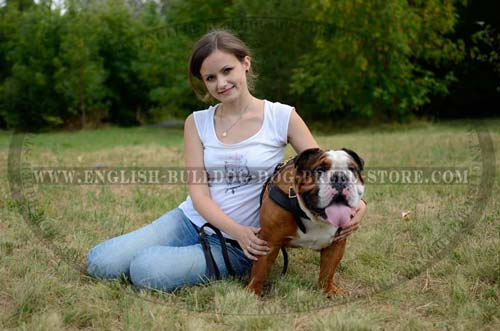 Best English Bulldog breed harness
