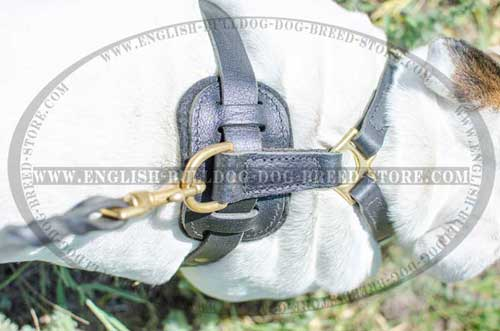 Comfy dog harness for English Bulldog breed