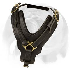 English Bulldog super durable leather dog harness