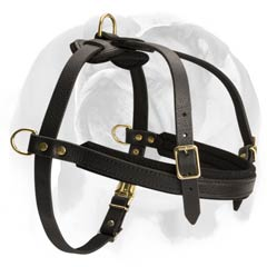 English Bulldog breed leather harness