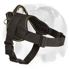 English Bulldog nylon pulling harness