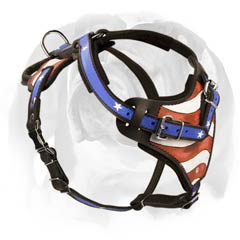 Genuine leather harness for English Bulldog