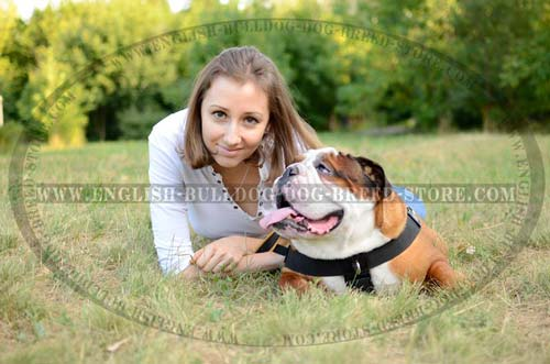 English Bulldog breed Harness with id patches