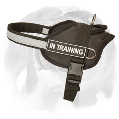 English Bulldog harness with removable id patch