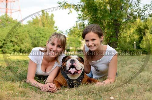 This English Bulldog Harness enjoys big demand