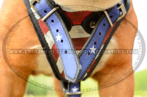English Bulldog quality leather harness