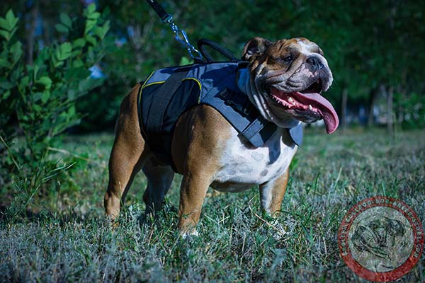 English Bulldog nylon harness with durable quick release buckle for walking
