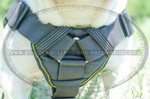 English Bulldog harness of nylon