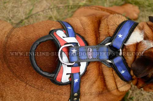 English Bulldog harness with handle for training