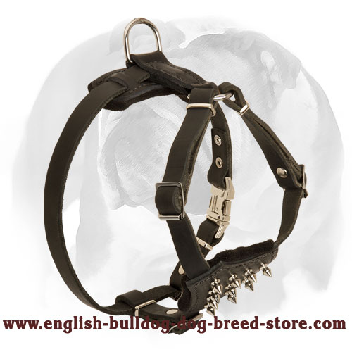 English Bulldog Leather Dog Harness for Puppies with Spiked Chest