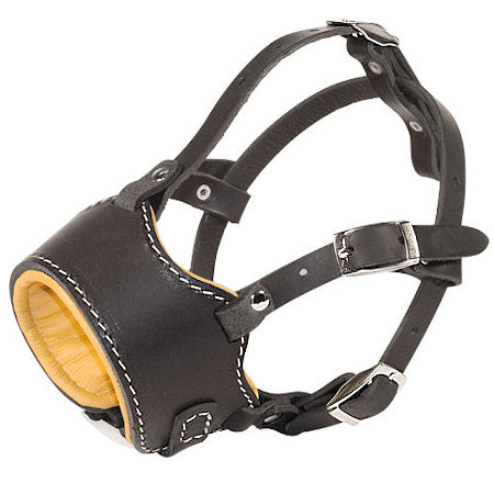 Stop Dog Barking for English Bulldog with this special design muzzle