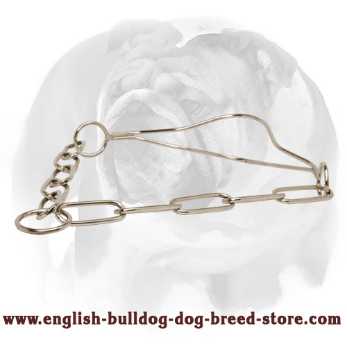 High-Quality Chrome Plated Show Dog Collar for English Bulldog