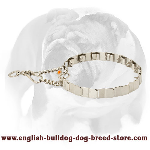 English Bulldog Dog Pinch Collar Made of High-Quality Stainless Steel