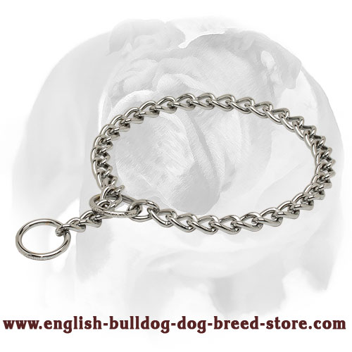 English Bulldog Chrome Plated Choke Dog Collar for Training and Behavior Correction
