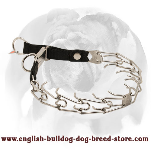Stylish Design of English Bulldog Stainless Steel Pinch Collar with Click Lock Buckle and Nylon Loop