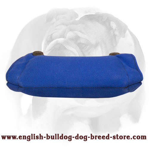 English Bulldog French Linen Bite Builder for Puppies