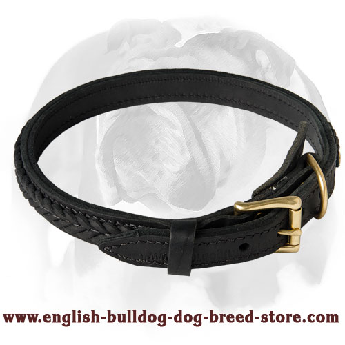 Trendy Dog Collar with braided decoration for your English Bulldog