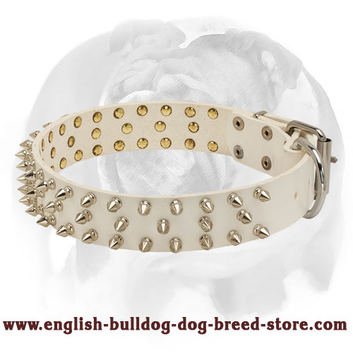 English Bulldog White Leather Dog Collar with Beautiful Spikes