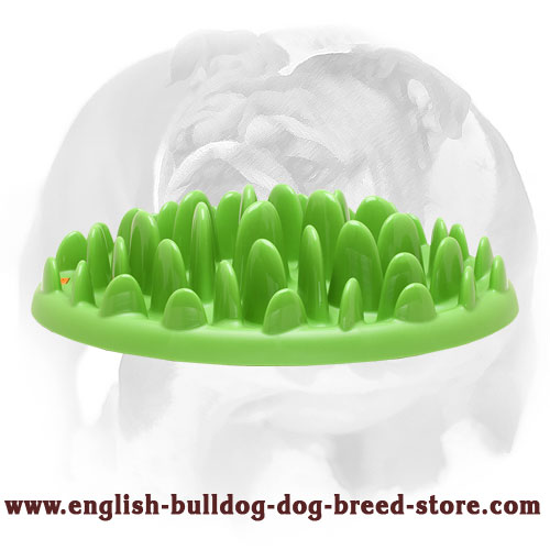"NEW ""Entertaining Green Tray"" feeder for your English Bulldog puppy that looks like a lawn"