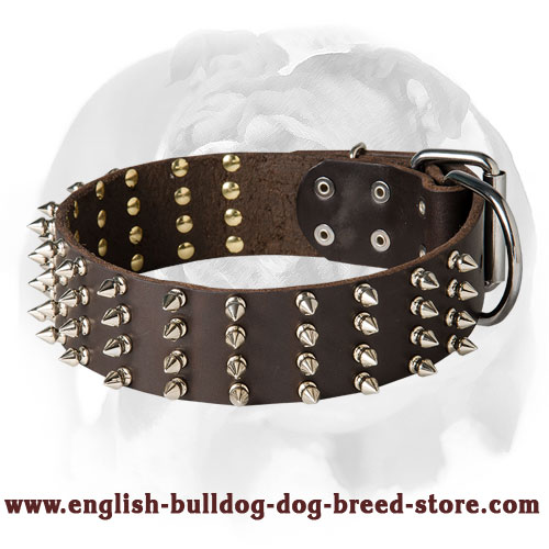 English Bulldog 2 inch Wide Leather Dog Collar with Spikes