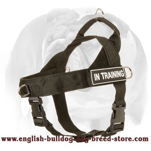 Nylon Harness for English Bulldog With Id Patches - Click Image to Close
