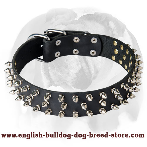 English Bulldog Wide Adjustable Strap Full Grain Leather Dog Collar with Spikes