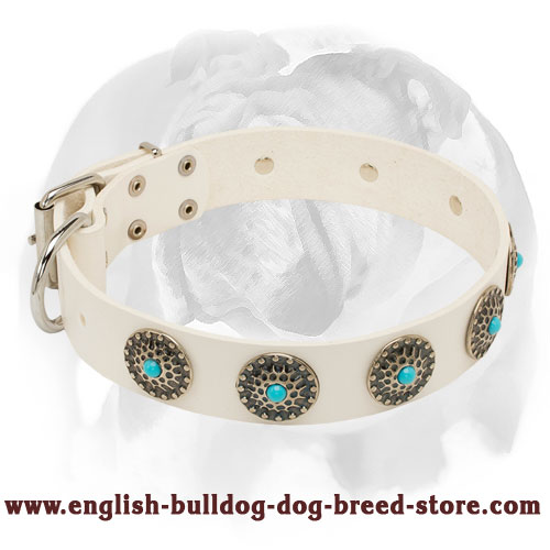 English Bulldog Fancy Leather Dog Collar with Blue Stones