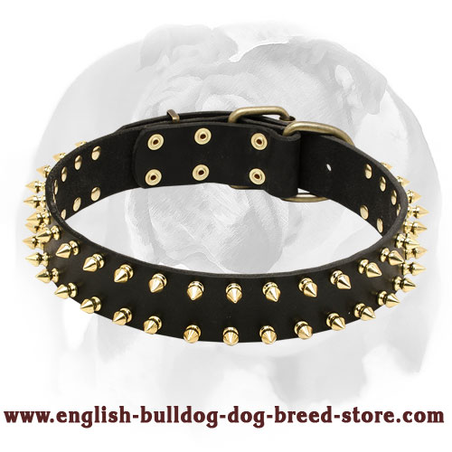 English Bulldog Protective Leather Dog Collar with Brass Spikes