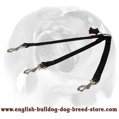 English Bulldog Nylon Coupler Leash for 3 Dogs