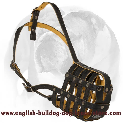 Elegant Leather Dog Muzzle for English Bulldog