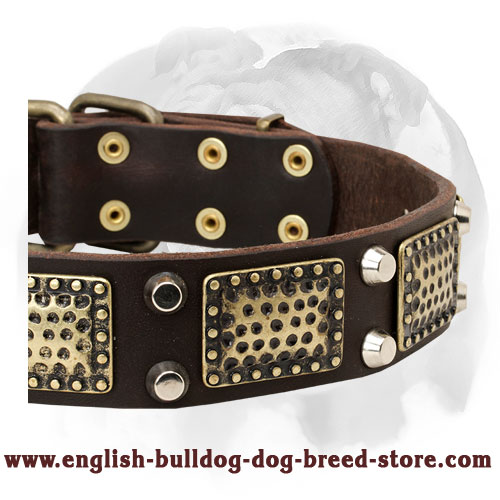 English Bulldog Vintage Style Pure Leather Dog Collar with Brass Decorations