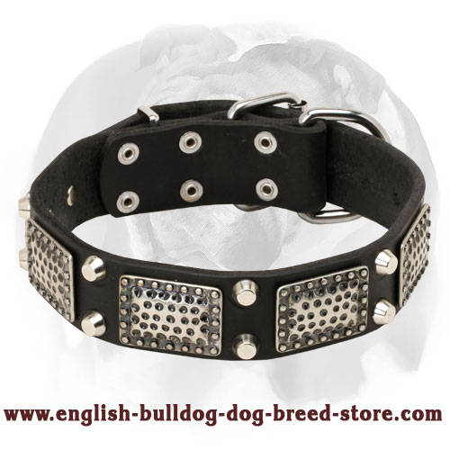 English Bulldog Leather Dog Collar with Massive Nickel Decorations