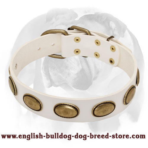 English Bulldog Limited Edition White Leather Dog Collar
