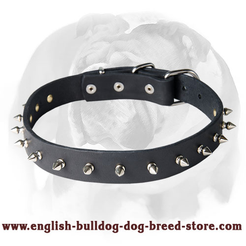 English Bulldog Leather Dog Collar with 1 Row of Spikes and Rivets