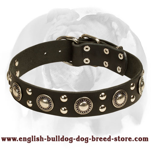 English Bulldog 'Silver Knight' Leather Dog Collar for Walking and Training