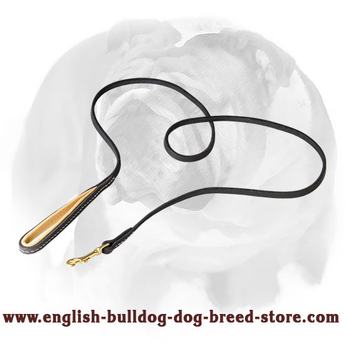 English Bulldog leather leash for walking and training