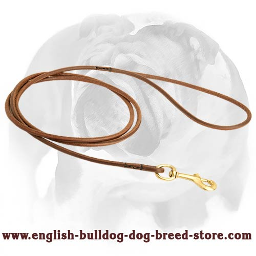 English Bulldog lead for dog shows