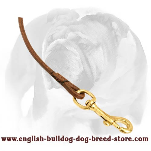 Dow show lead for English Bulldog